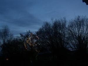 Frosne trær får spinkle lyspunkter i den iskalde desemberkvelden