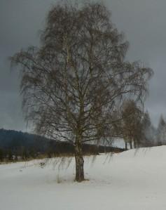 Det vakre hvite er borte fra trærne for en stund