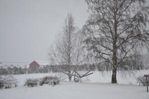 TRærne står svarte igjen - det hvite fine rimet har blåst sin vei
