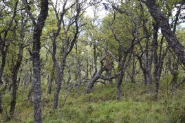 August: Trollskogen på Måna