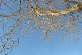 Grenene strekker seg mot en blåblå himmel - det nærmer seg vår!