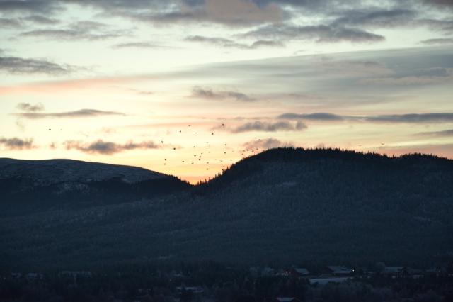 Noen fugler ser ut som om de leker sisten mot den lyse himmelranden