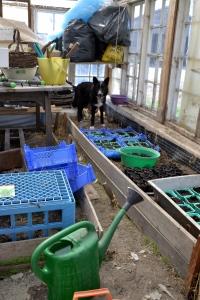 Jord og gjødsel er fordelt i ulike potter i det nyryddete drivhuset