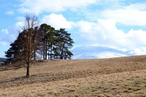 Jordet vårt er fortsatt lysebrunt og Tronfjell er blitt hvitt (igjen), men snart, snart grønnes det, også her.