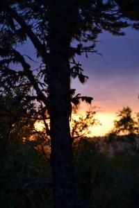 Solnedgangene har vært mange og flotte! Her fra Svartåspiggen, ovenfor sætervangen vår
