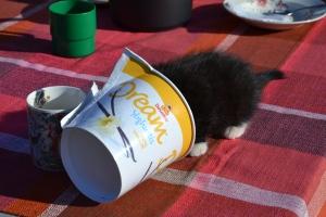 Katten Gudleik er et annet dyr vi har fått et sterkt forhold til! Etter som dagene ble varmere ble det konsumert en god del iskrem, og Gudleik lot seg ikke be to ganger for å få slikke boksen etter oss!