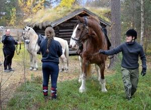 Flotte hester som stilte opp for en ridetur for de minste