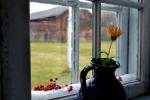 Bomull med rognebærpynt i vinduskarmen - akkurat som vi husker det fra mormors hus