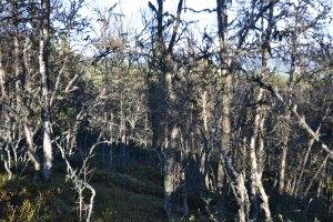 """Vi vandret og klatret gjennom tett """"trollskog"""" for å komme til toppen"""
