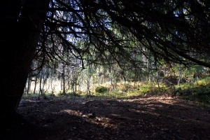 Et kjempeflott hus under grenene på dette digre grantreet