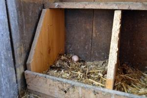 Et lite, lysebrunt egg