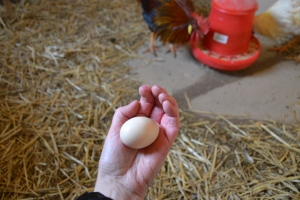 Egg nummer to er ankommet!