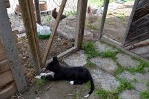 Bjørk har fått en yndlingsplass: utenfor hønsehuset. Der kan hun ligge lenge bare å se på de fjærkledde