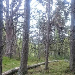 Her passerer vi gjennom noe som nærmest er som en urskog å regne