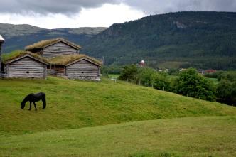 Vakker hest gresser i bakken ved Husan