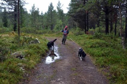 En noe utfordrende start, med hunder springende til alle kanter!
