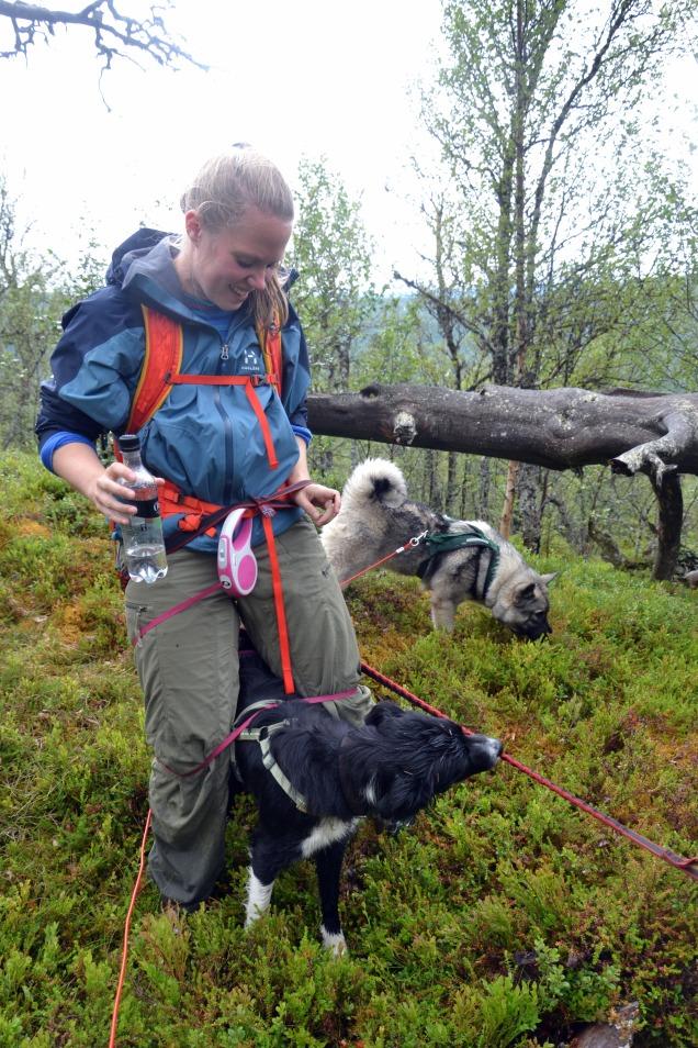 Det kunne by på noen utfordringer å skulle holde styr på tre båndhunder!
