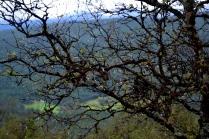 Alt var nyvasket og fint, og vanndråpene hang som perler på busker og trær