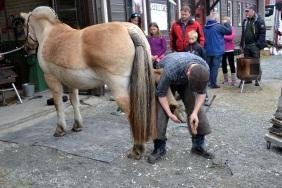 - og hesten blir skodd
