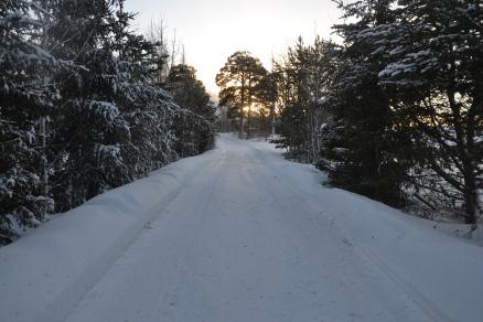 Fin vintervei