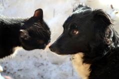 Gudleik og Bjørk tar seg tid til litt kos i sola
