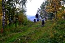 På tur med hundene