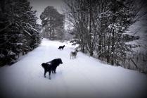 Hundene må få en tur tross tjue minusgrader