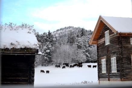 Limousin i snøen