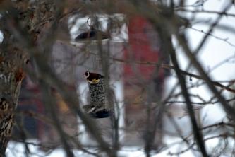 Småfuglene trenger fortsatt påfyll av frø
