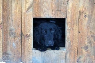 Ella koser seg inne i huset sitt når snøen fyker sidelengs