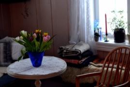 Tulipanfryd - en gang var det tegnet på at våren nærmet seg
