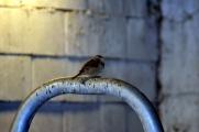 Flere forskjellige fugler har tilhold i fjøset