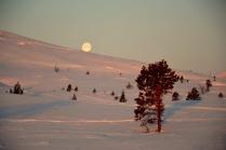 Månen triller hjem og legger seg