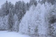 Snø og rimfrost
